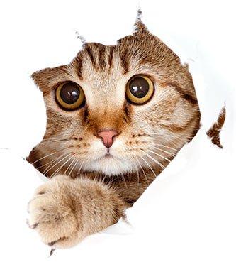Natural Remedy For Cat Dander