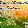 10 Proven Home Remedies for Scabies