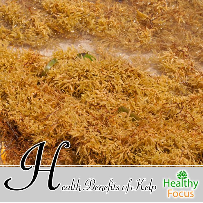 hdr-Health-Benefits-of-Kelp