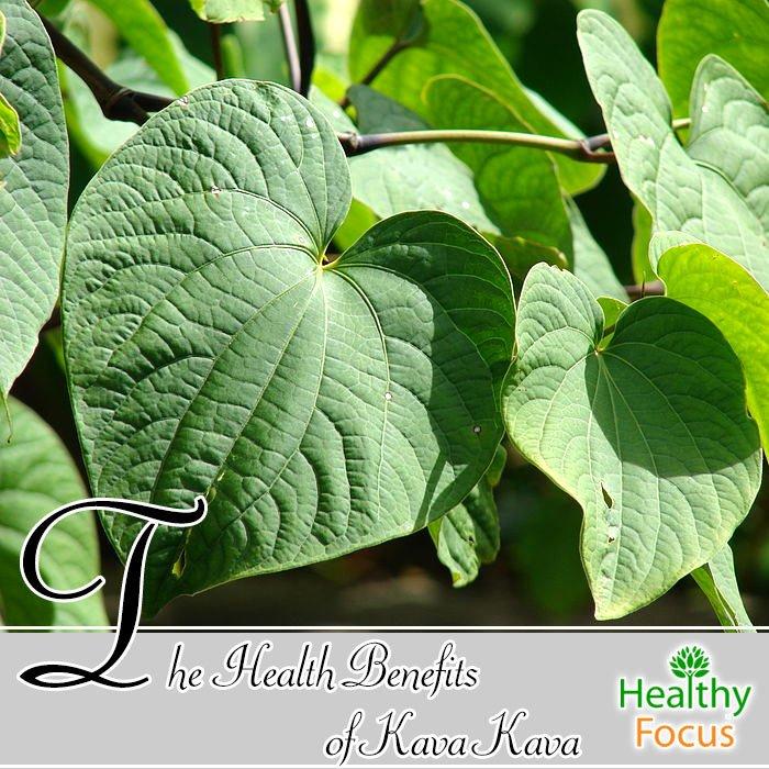 hdr-The-Health-Benefits-of-Kava-Kava