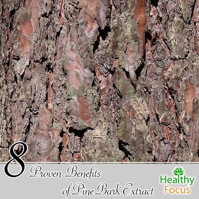 hdr-8-Proven-Benefits-of-Pine-Bark-Extract
