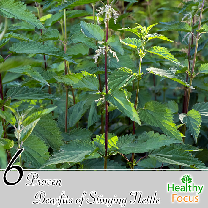 hdr-6-proven-benefits-of-stinging-nettle