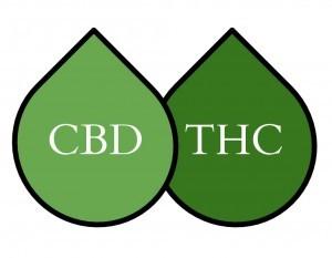 cbd vs thc