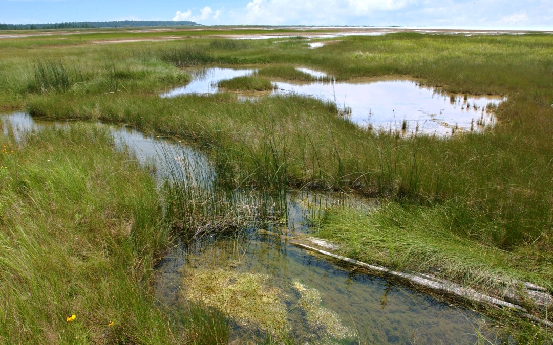 Coalition Opposes Trump Move to Weaken Clean Water Protections