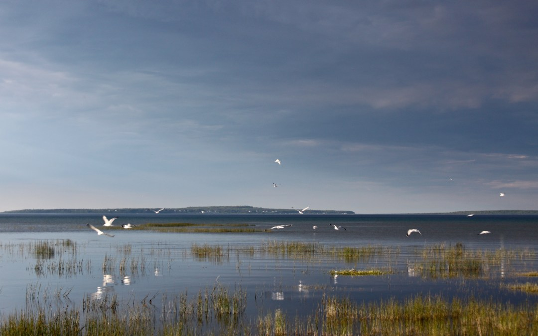 Birds take flight in a wetland