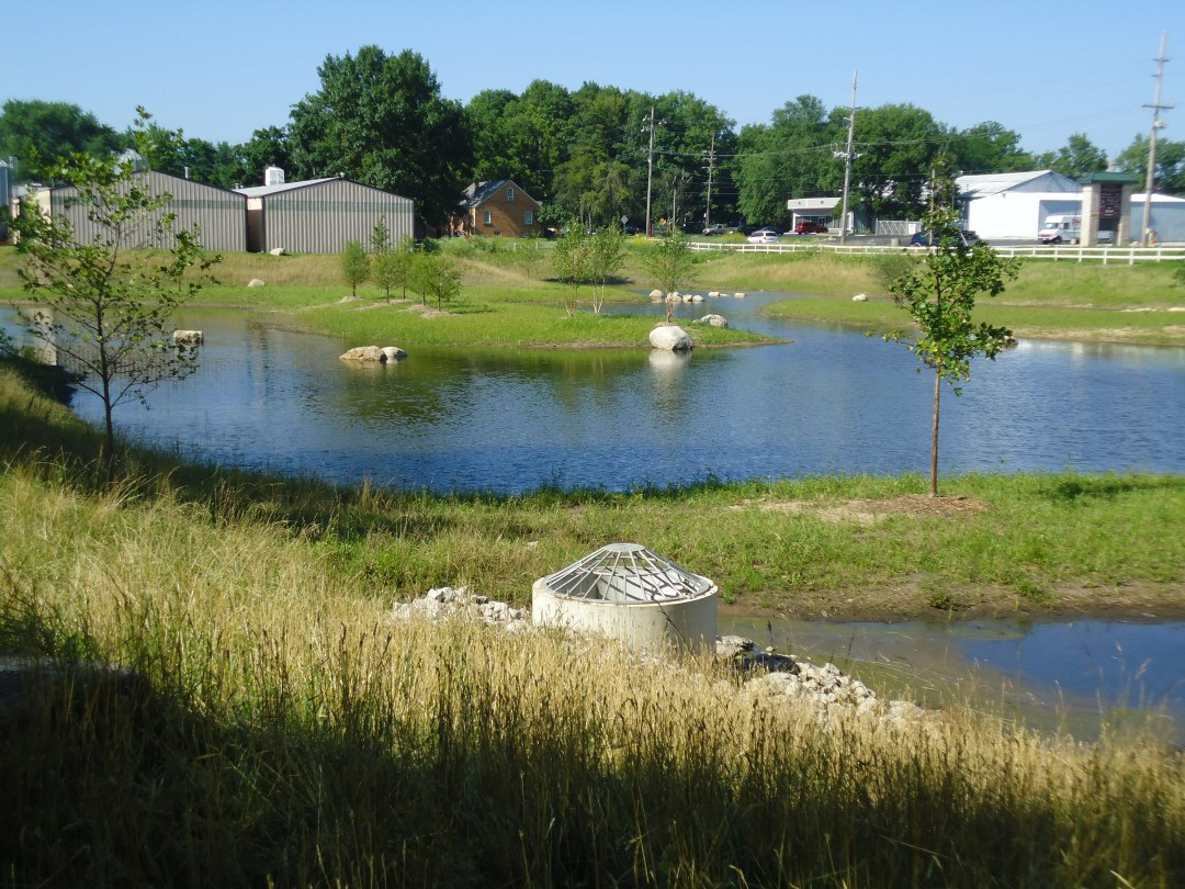 A water filtration basin with grass and plantings all around.