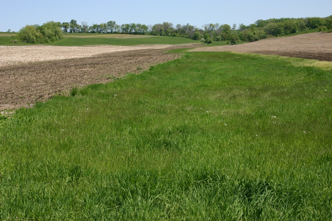 A strip of grass between the farm field and a stream will help reduce polluted runoff.