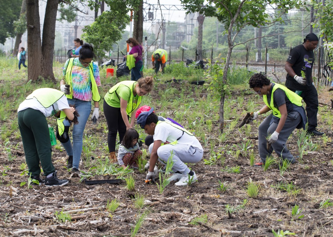 Volunteers work on planting saplings in the Burnham Wildlife Corridor in Chicago.