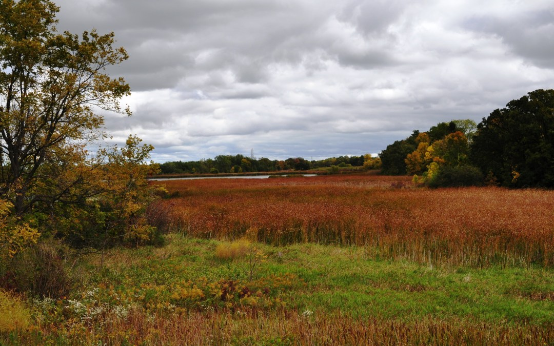 A wetland landscape in Wisconsin