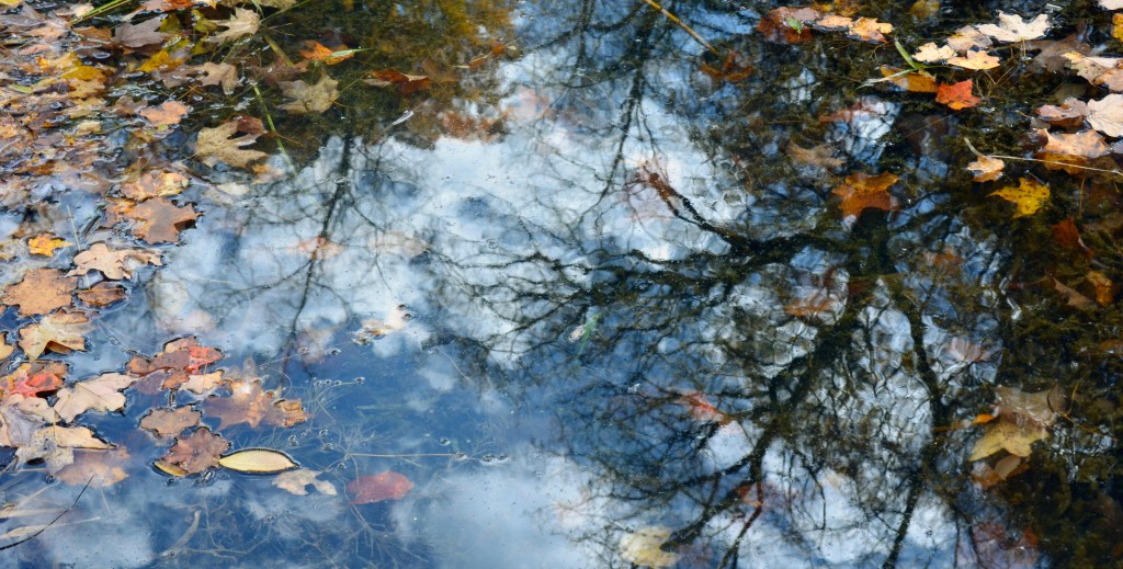 Reflection of trees in water sprinkled with leaves