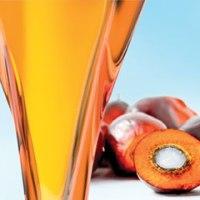 Palm Oil Advantages and Disadvantages