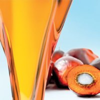 Palm Oil Advantages and Disadvantages