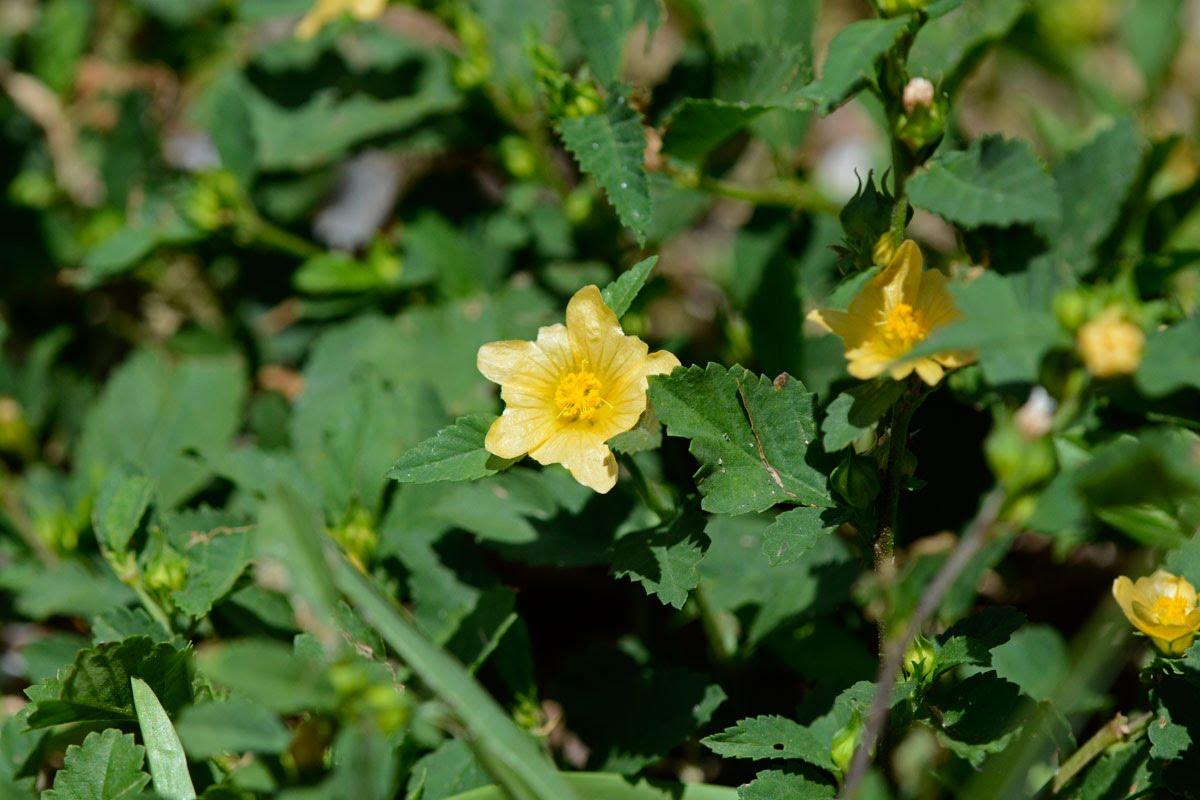Plants Kerala Medicinal