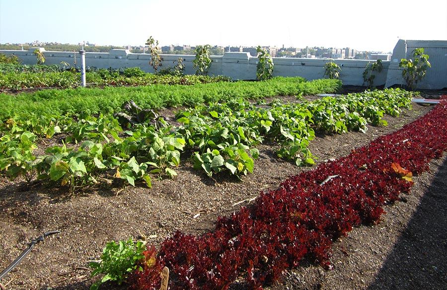 Backyard Cash Crops backyard garden 'cash crops': make money with a home garden