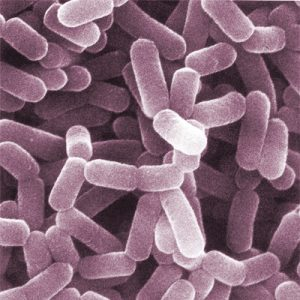 Probiotic of Lactobacillus spp is can help to maintain the microenvironment balance in verginal. (Photo credit: AJC ajcann.wordpress.com/Flickr.com)