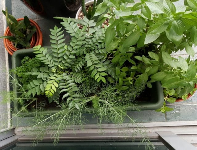 Our little herb garden at home