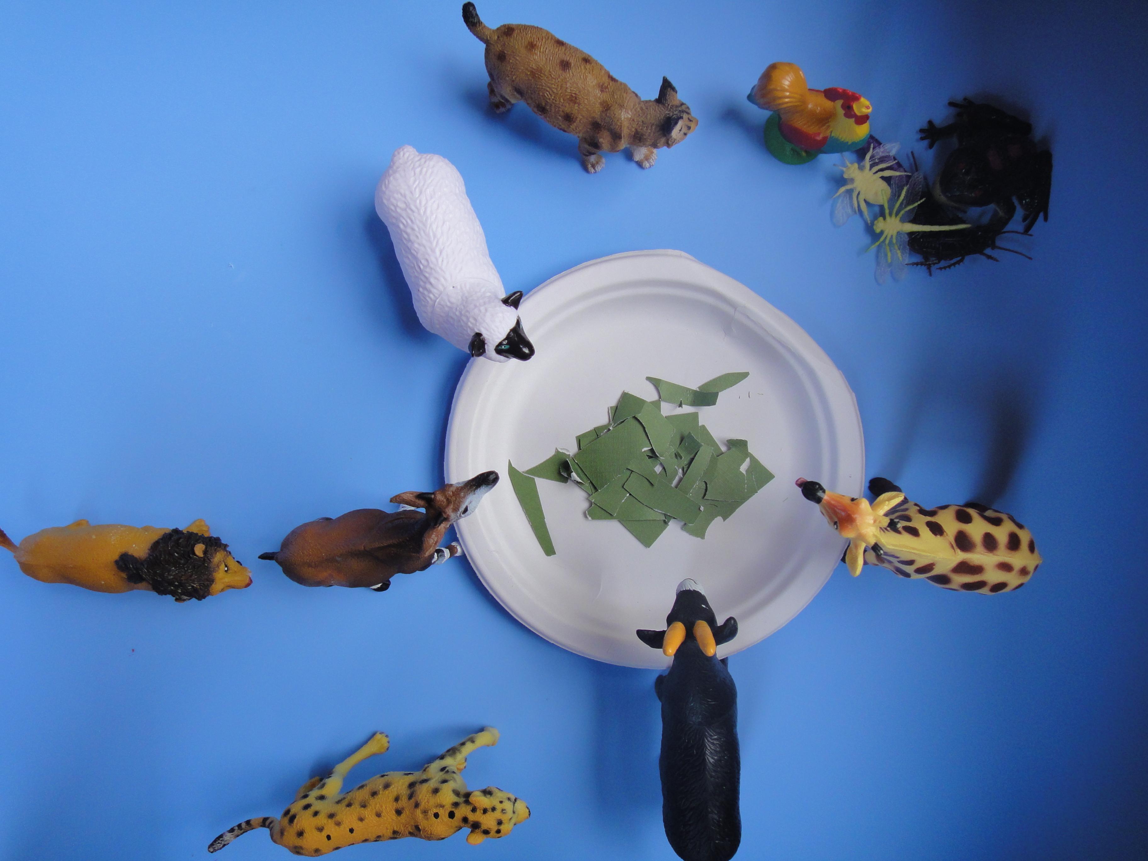 What Do Animals Eat Preschool Project