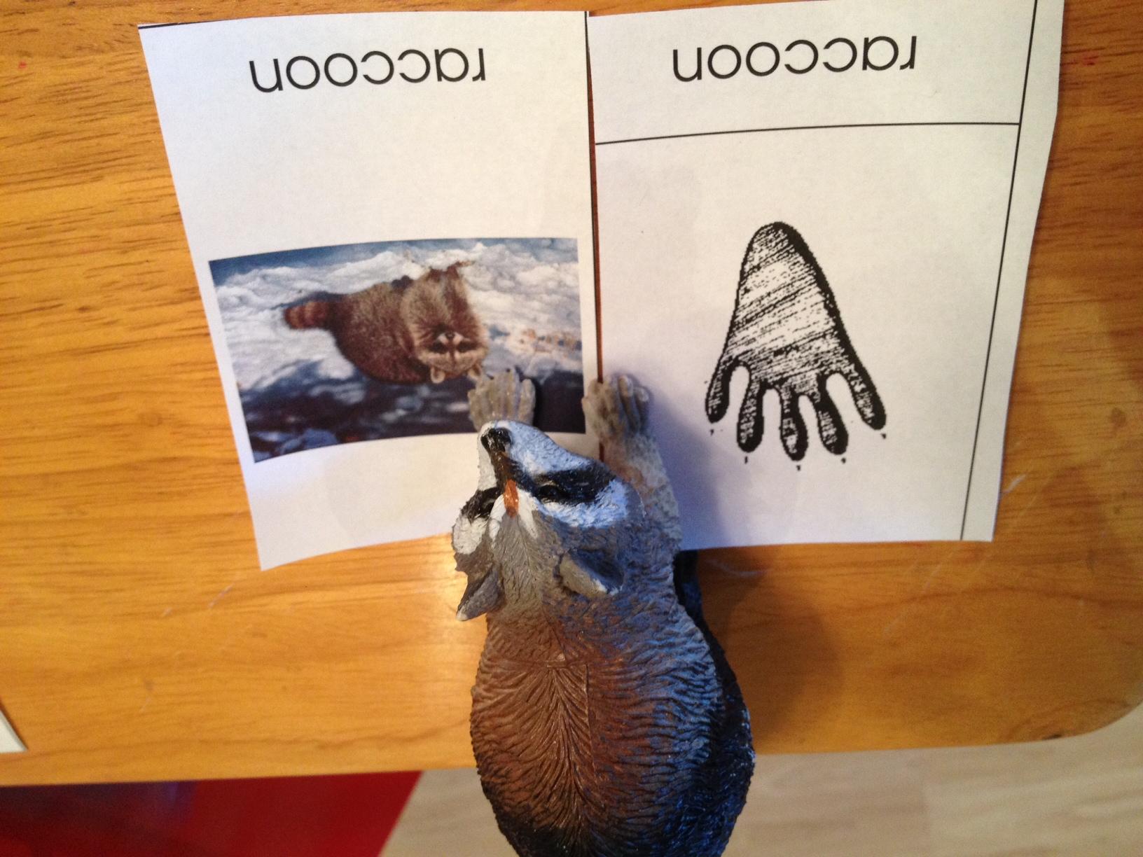 Learn Animal Footprints With Montessori