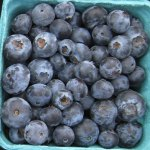 blueberries for health