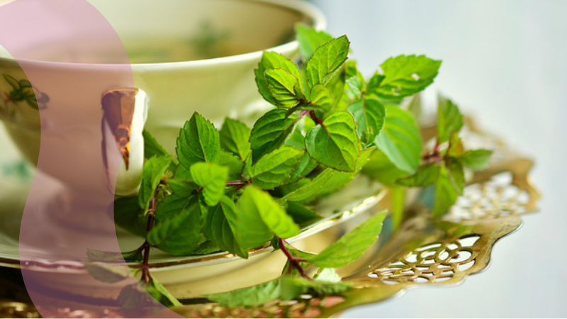 Fast Facts About Organic Green Tea