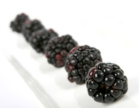 Summer fruit salad ingredients, blackberries in a line, macro close up on white with copy space