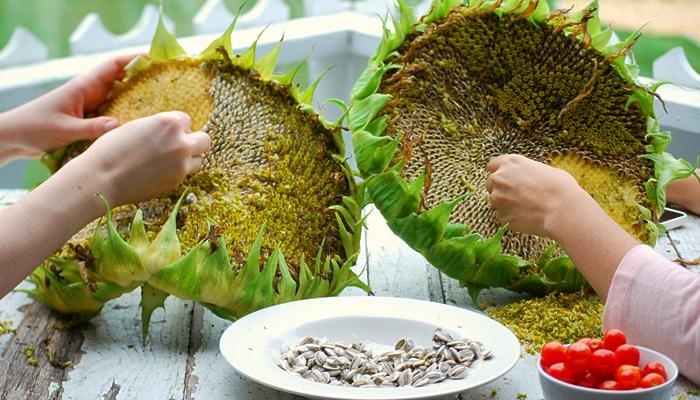 Special Ingredient Saturday – Sunflower Seeds