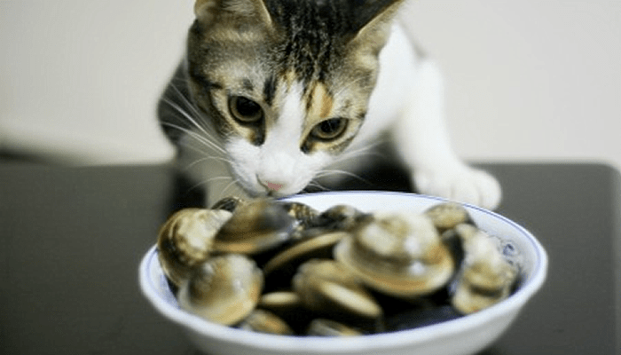 Special Ingredient Saturday – Clams