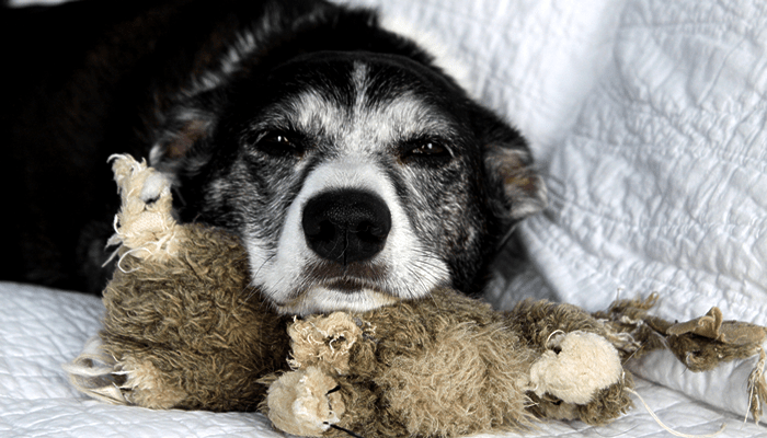 Is Glucosamine the Best Supplement for a Pet with Arthritis?