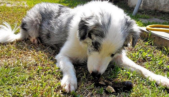 4 Reasons Dogs Eat Poop & How Bad is It?