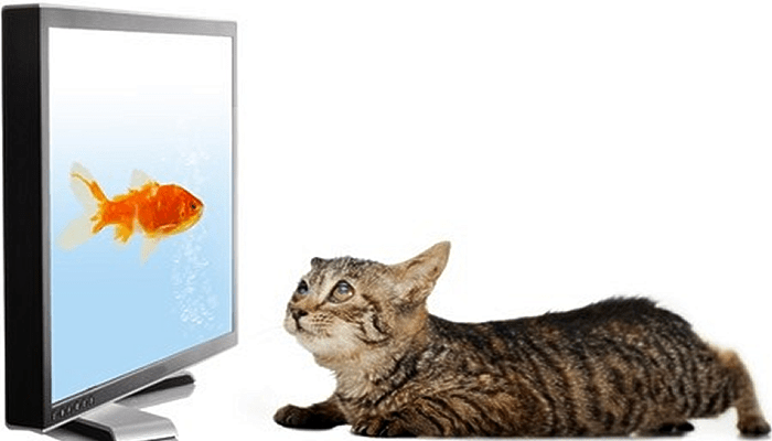 My Kitty Day Care wants to Charge Extra for TV Time. Can Cats even Watch TV & is There any Benefit for Them?