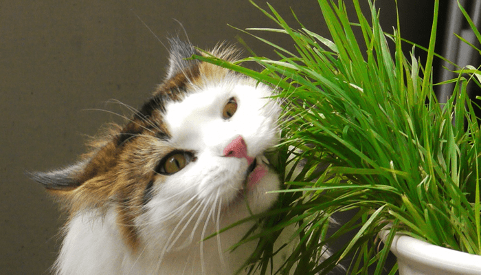 What plants are poisonous to my pet?