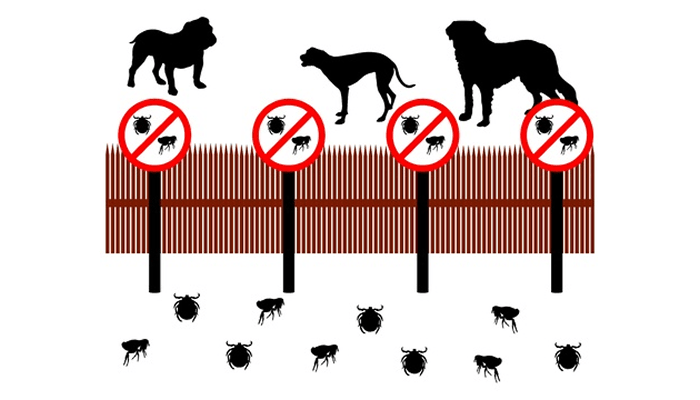 Do I Need Flea Medication or Heartworm Preventative in the Winter Months?