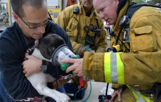 Firefighters saving a dog