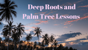 Palm Tree Lessons