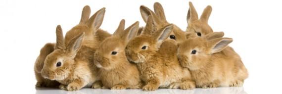 rabbits-570x190