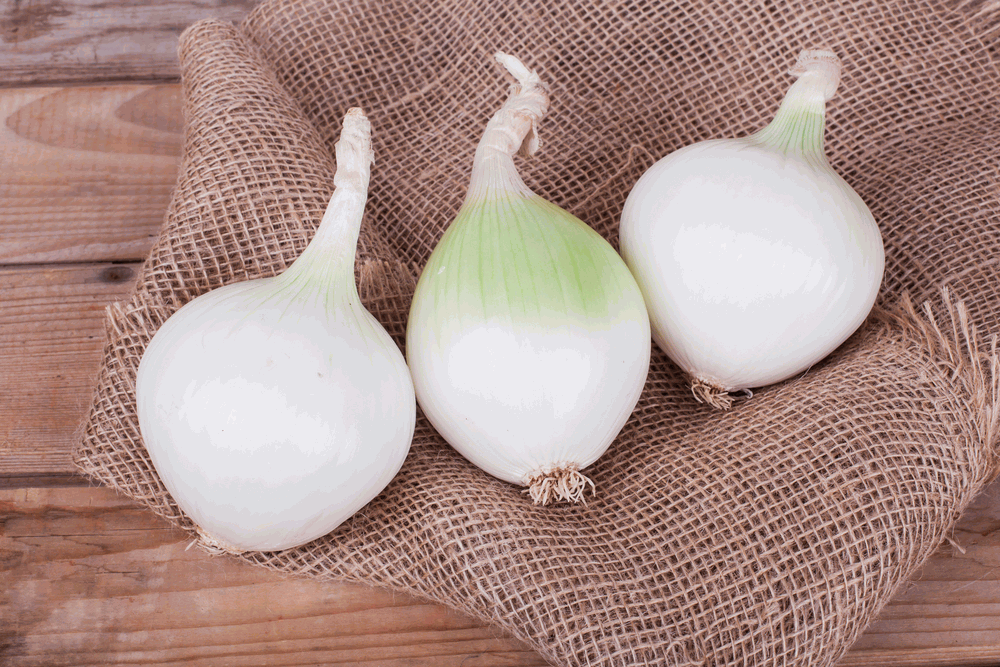 Health Benefits Of White Onion