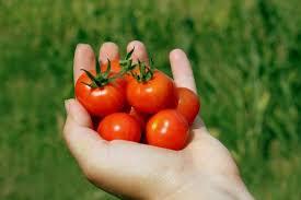 Yummy Cherry Tomatoes!