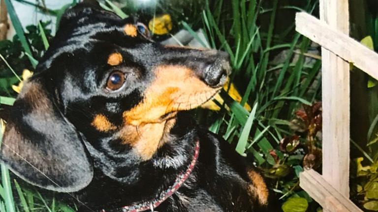 Tucker the Tomato Loving Dog