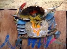 Crab Guts