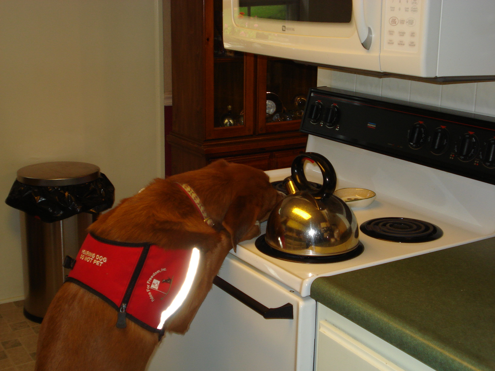 """No worries... this is a staged picture. The tea kettle is cold, and a treat is on the stove to award a """"Paws up"""" command."""