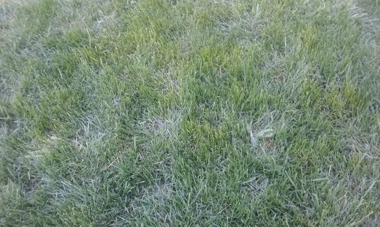 grassgreen