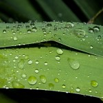 This image shows raindrops on top of green leaves.