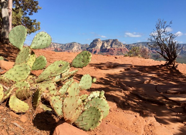 Photo taken near Sedona, Arizona, showing a green prickly pear cactus in the foreground, red soil and rock, a shrub in dark shadow, and mountain peaks and blue sky in the background.