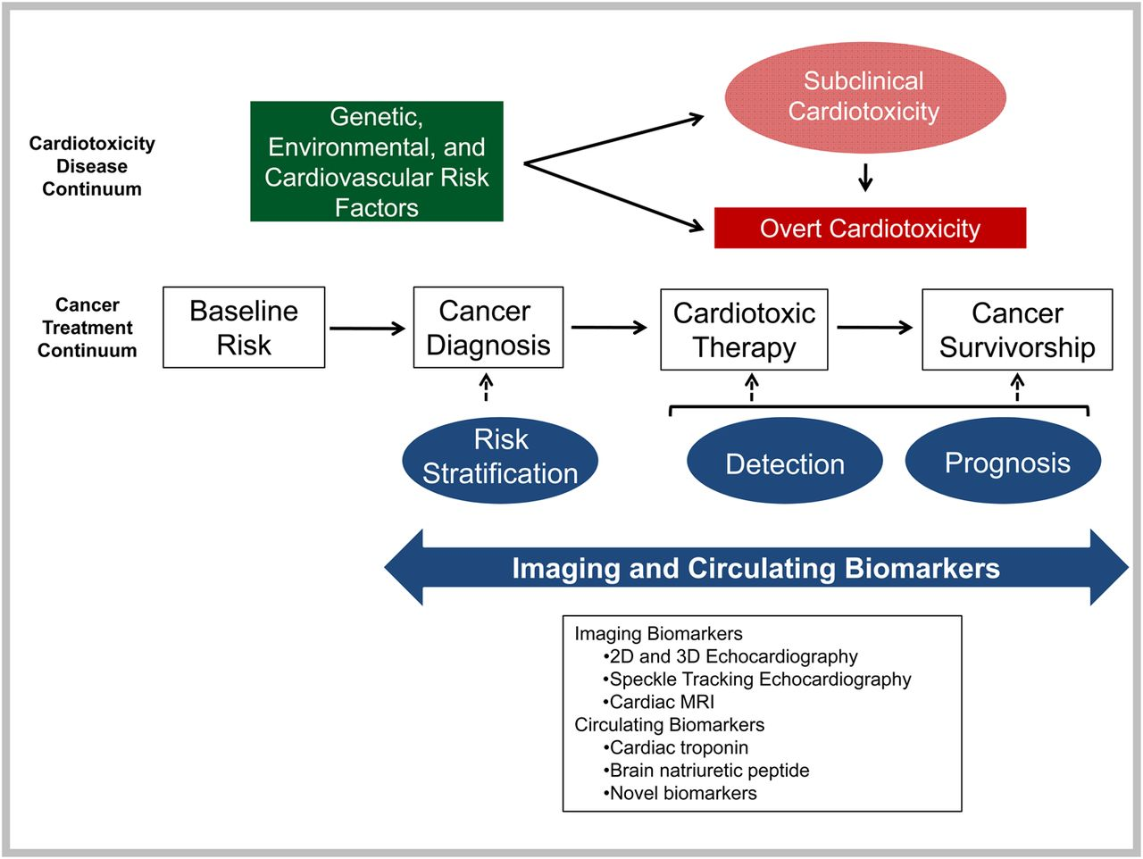 Roadmap For Biomarkers Of Cancer Therapy Cardiotoxicity