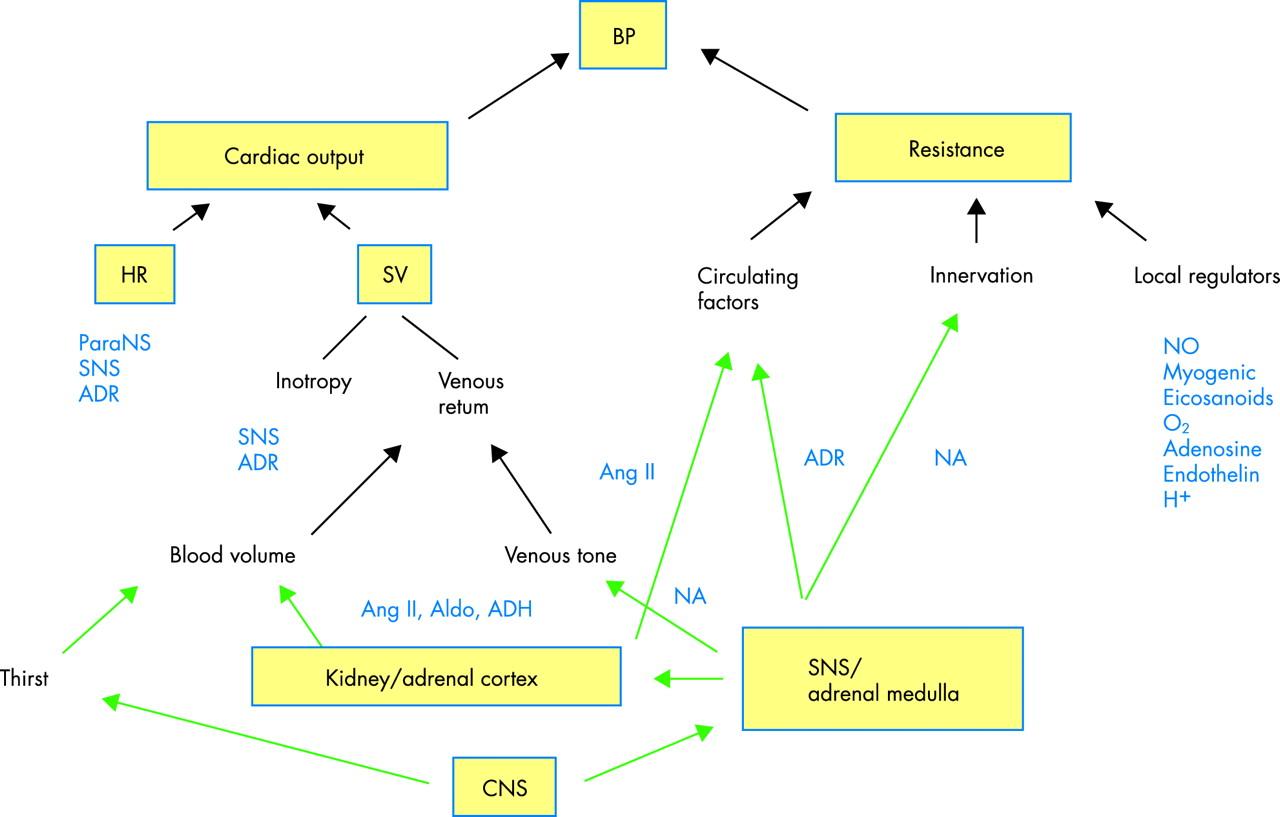Cardiac And Vascular Pathophysiology In Hypertension