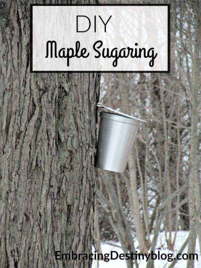Read about our experience with DIY Maple Sugaring at home. You can try it too with Tap My Trees! heartandsoulhomeschooling.com