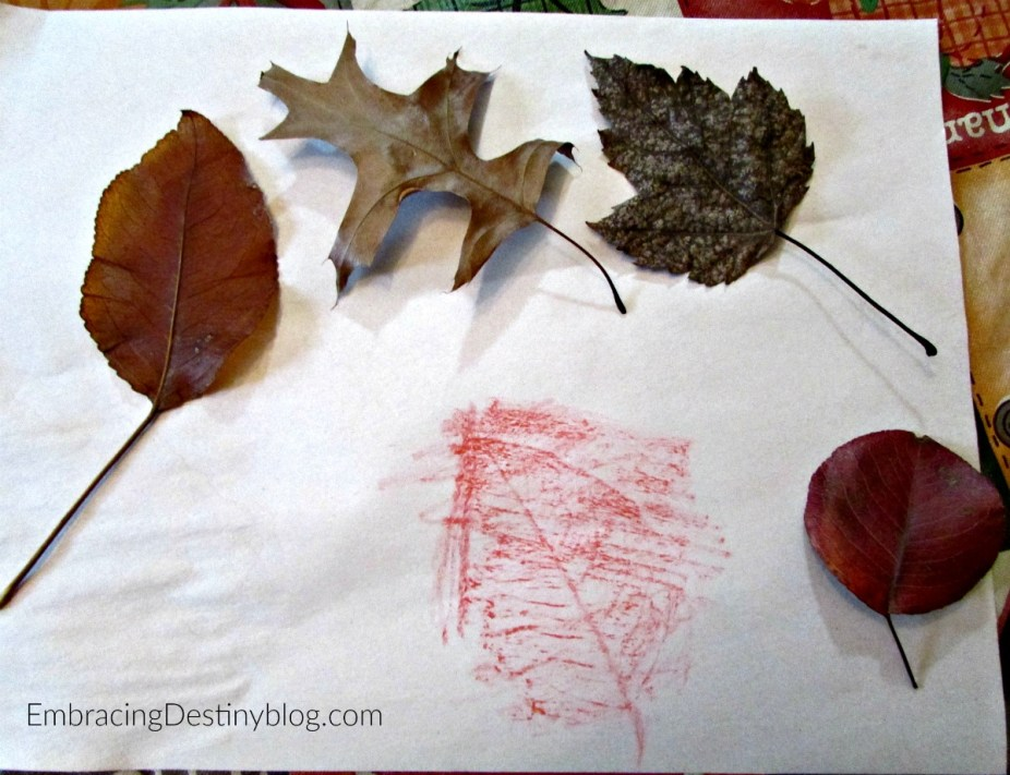 Leaf rubbings as part of a basic nature study. Nature Study for Beginners. heartandsoulhomeschooling.com