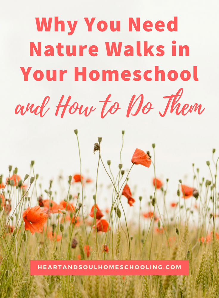 How to do nature walks in your #homeschool | #homeschooling nature study