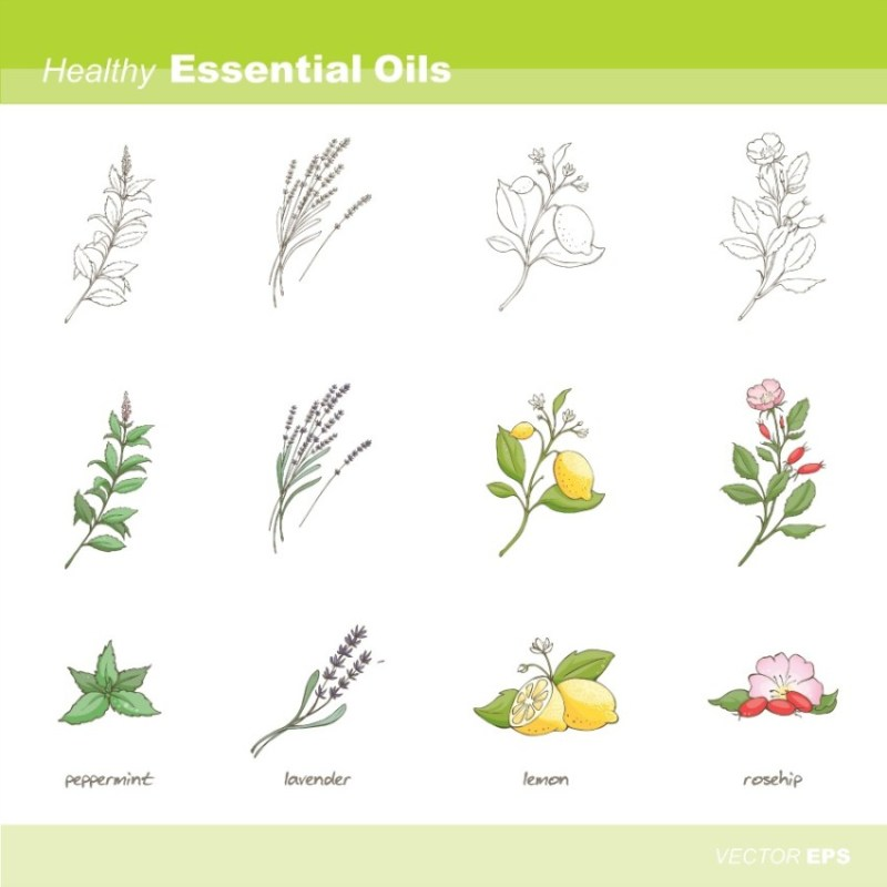 Rosehip Oil is one of the healthy Essential oils