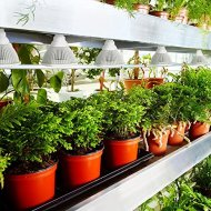 Alite Advanced LED Plant Grow Light By Chromo Inc